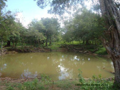 pond 2015 copy